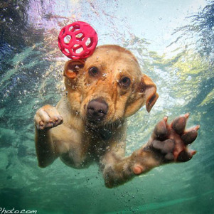 Dogs Catching Ball Under Water by Seth Casteel