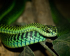 10 Most Venomous Snakes on Earth