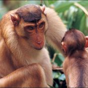 50+ Facts about Monkeys