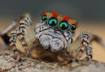 "The Most Creepy Insect that is ""Spider""!!!"