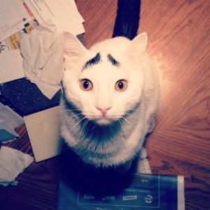 Have You Ever Seen Cat With Eyebrows???