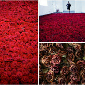 10,000 Beautiful Roses – Life and Death