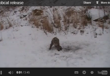 Top 10 Videos of the Day – January 3rd 2013
