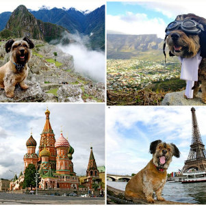 Oscar – Lovely Dog -Traveler