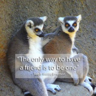 Check Out The Famous Friendship Quotes…