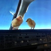 The Chicks Learn To Fly In Cockpit…..