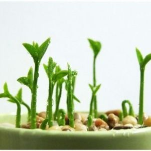 Beautiful Creativity – From Lemon Seeds to Lemon Tree