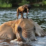 A Lovely Dog and An Elephant Are Best Friends