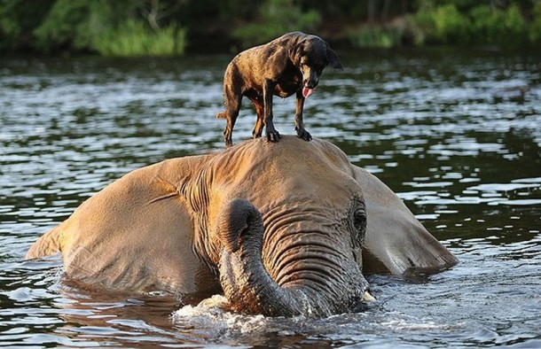 A Lovely Dog and An Elephant Are Best Friends (1)
