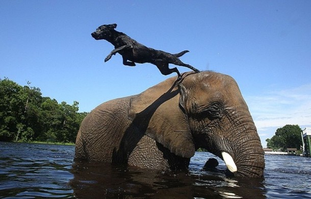A Lovely Dog and An Elephant Are Best Friends (5)