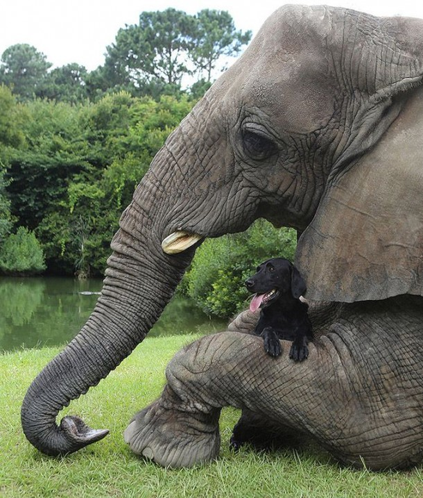 A Lovely Dog and An Elephant Are Best Friends (7)