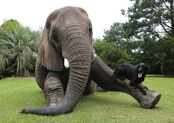 A Lovely Dog and An Elephant Are Best Friends (9)