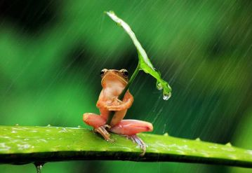 Incredible Impressive Frog in Pictures…