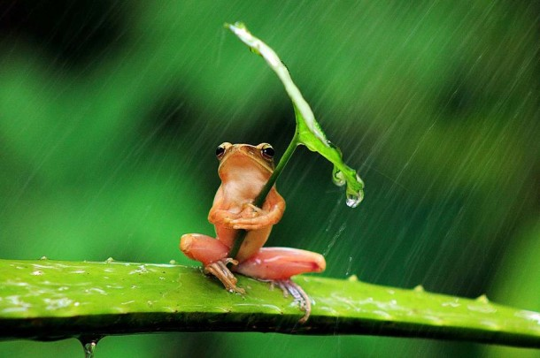 Incredible Frog in Pictures... (1)