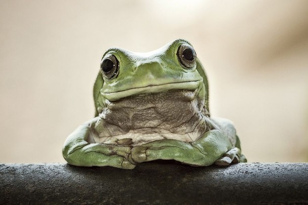 Incredible Frog in Pictures... (2)