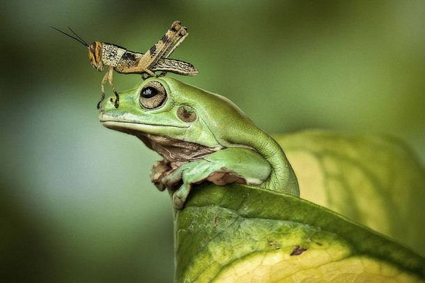 Incredible Frog in Pictures... (3)