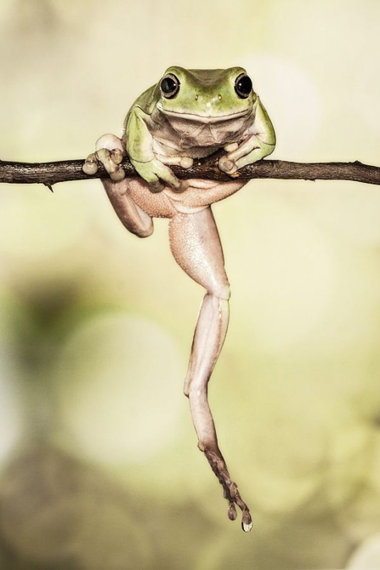 Incredible Frog in Pictures... (5)