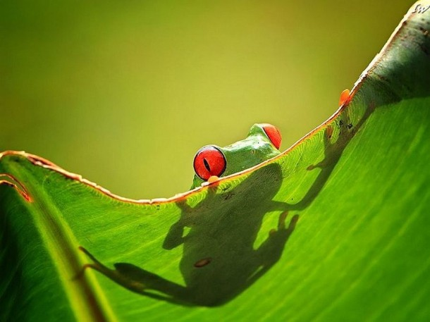 Incredible Frog in Pictures... (6)