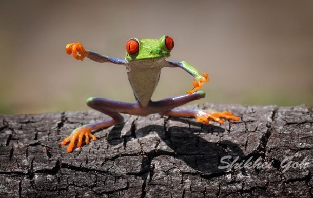 Incredible Frog in Pictures... (7)