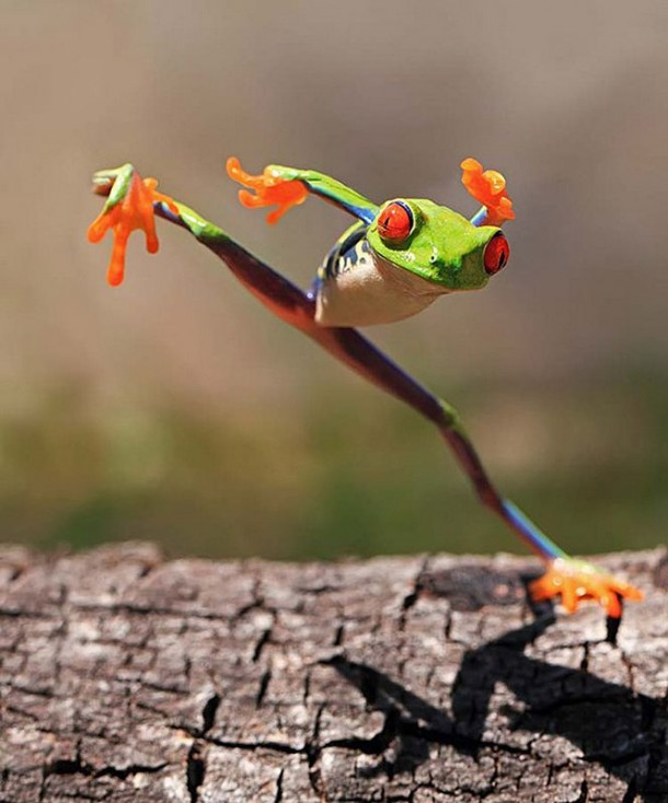 Incredible Frog in Pictures... (8)