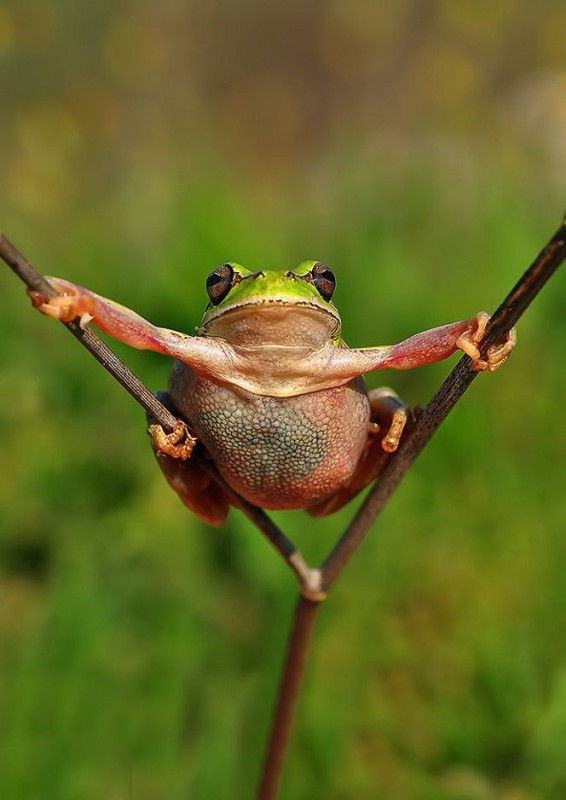 Incredible Frog in Pictures... (9)