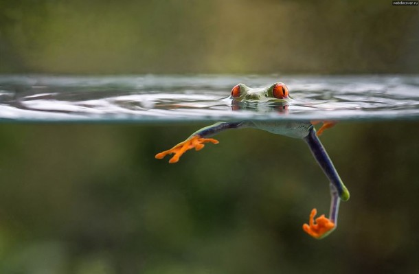 Incredible Frog in Pictures... (10)