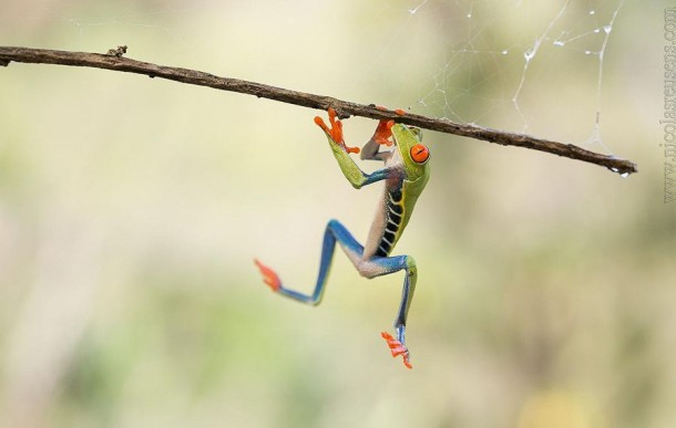Incredible Frog in Pictures... (11)