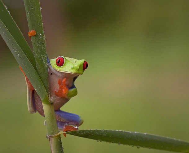 Incredible Frog in Pictures... (12)