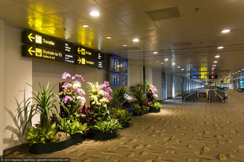 The Best Airport Of The World - Changi Singapore (3)