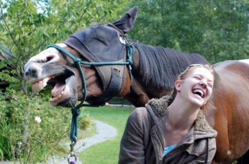Funniest Animals Photobombs You May Have Ever Seen... (6)