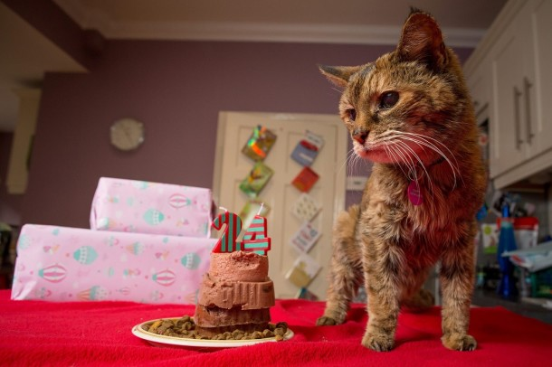 The Oldest Cat in the World Got Into The Guinness Book (3)