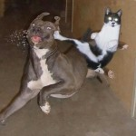 20 Cats with Ninja Techniques and Secrets