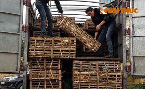 3 tons of living cats caught on way from China to Vietnamese restaurants