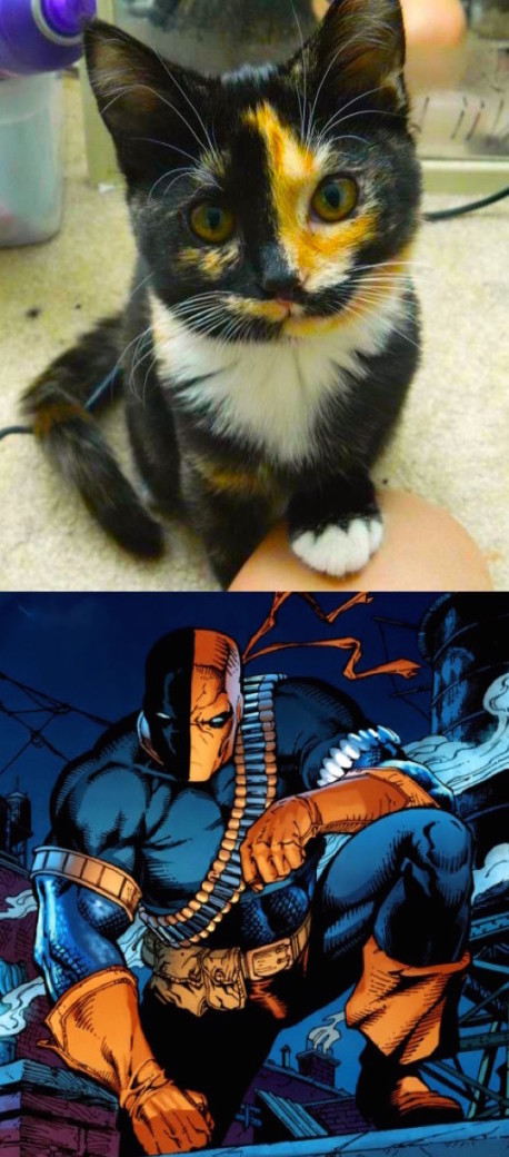 Deathstroke seems to be an appropriate name.
