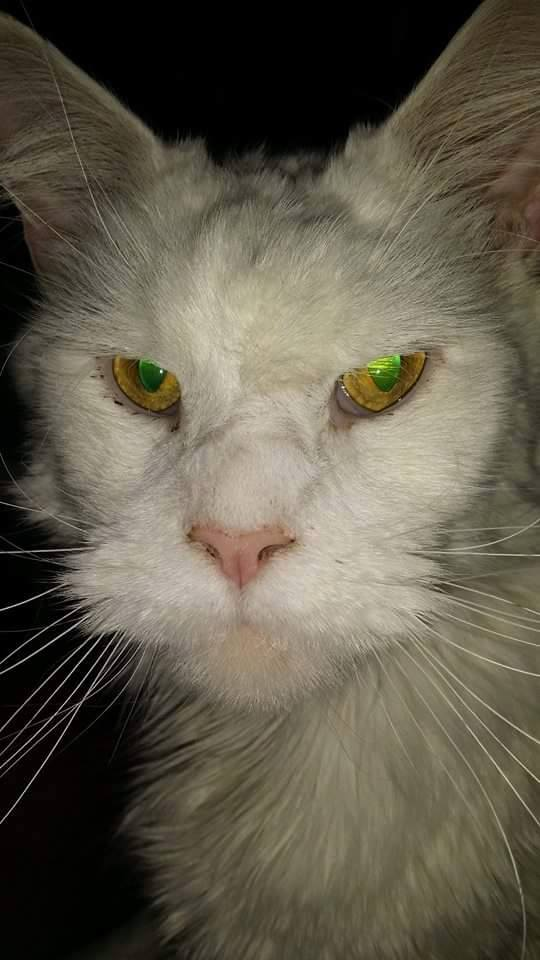 I was told today that my cat looks like Ron Pearlman.