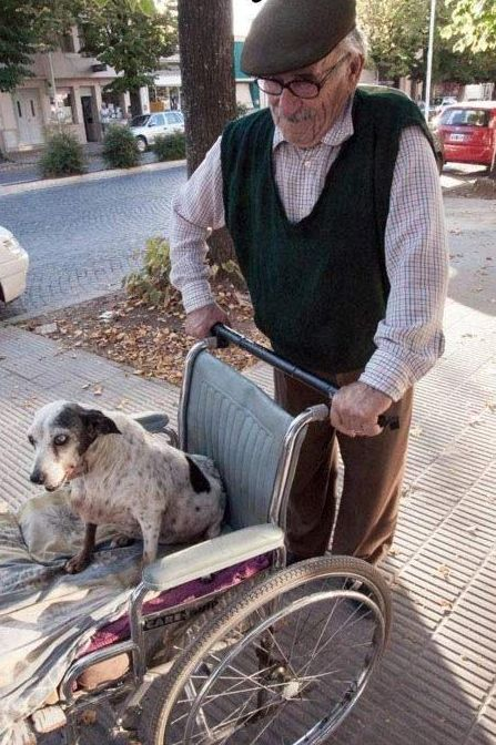 This guy has this dog, and she can't walk anymore. So he takes her out for a walk every day in a wheelchair. I couldn't find any word for this.