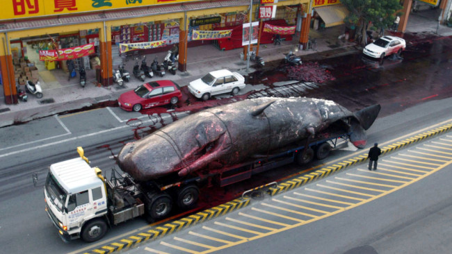 Whale of a Tow Job