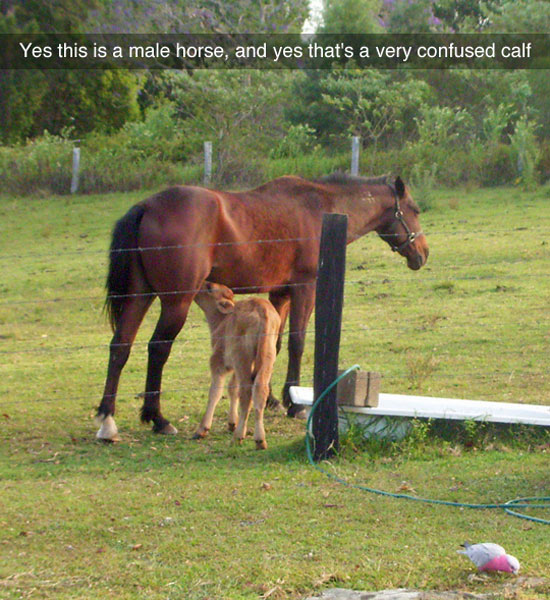 Confused calf, happy horse.