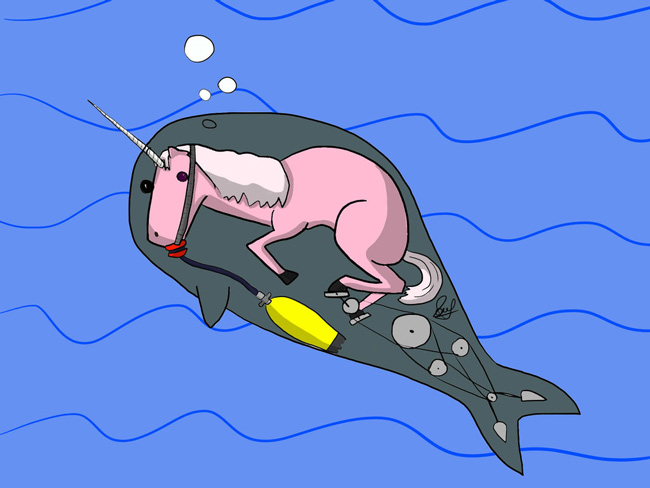 Narwhals, the truth