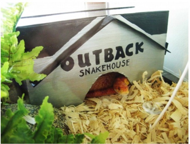 Outback Snakehouse