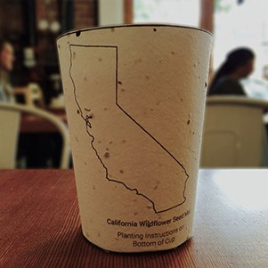 Plantable Coffee Cups Grow Into Trees