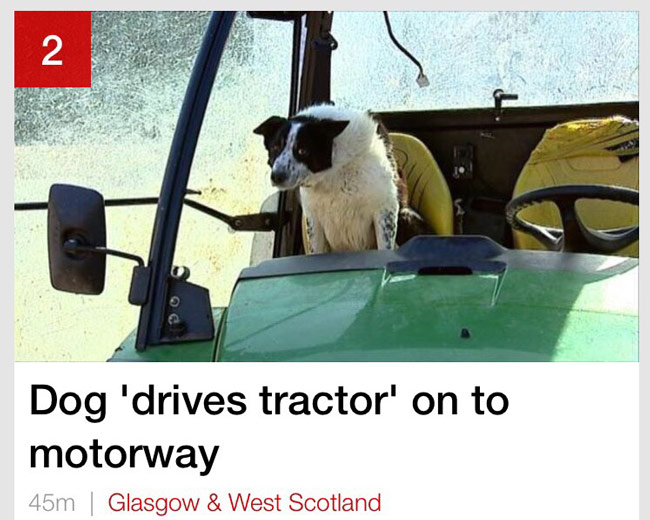 DWD - Driving While Dog.