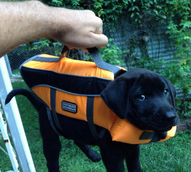 Briefcase with important lab results.