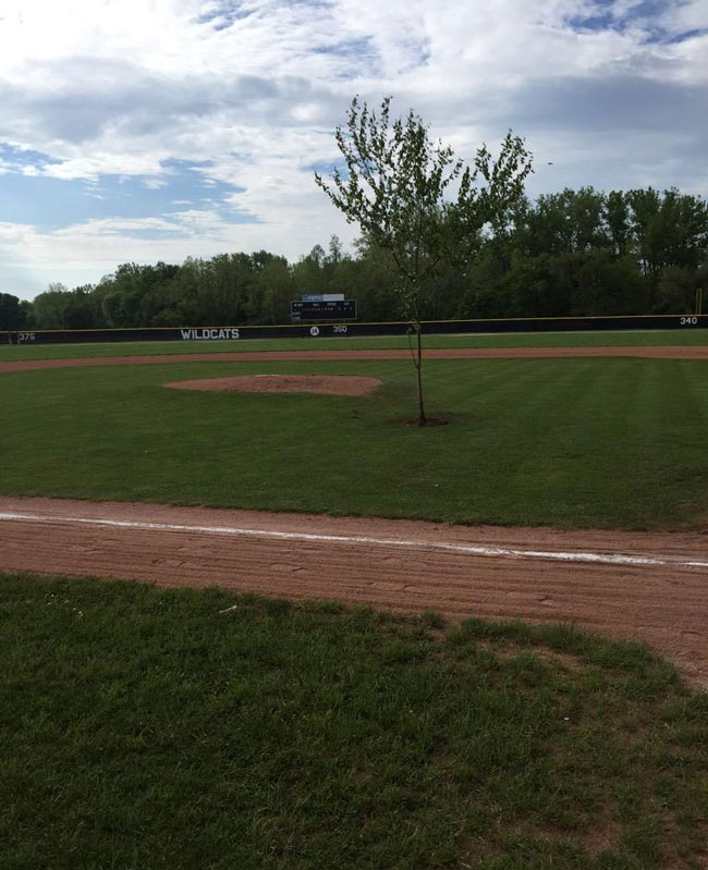 High school pranksters in Ohio planted a tree in the middle of the baseball field.