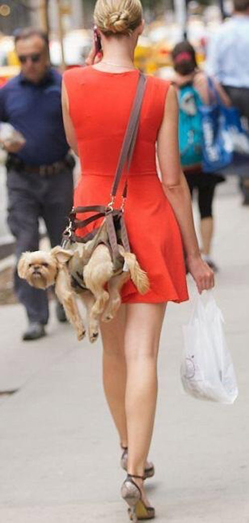 I like to imagine that this dog has just completed a parachute jump and landed on a woman.