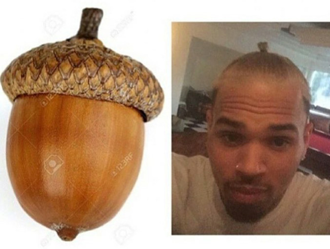 I think Chris Brown is trying to become an acorn