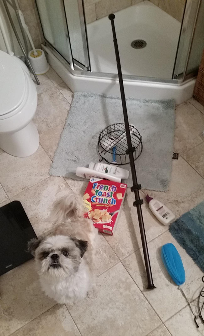 "Shower pole fell while I was at work. Tobey tried to ""fix"" it with a box of French Toast Crunch. It didn't work."