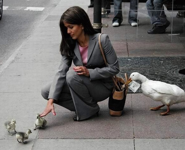 Beware of the cute gosling scam!
