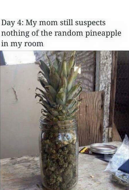Day 4: My mom still suspects nothing of the random pineapple in my room