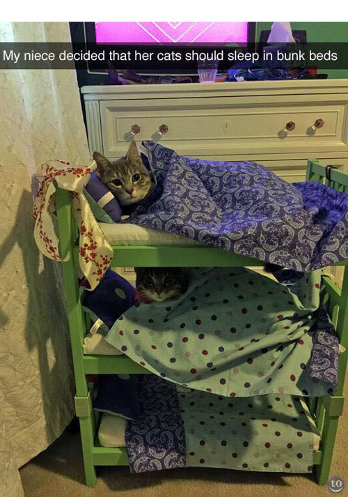 Niece decided that her cats should sleep in bunk beds